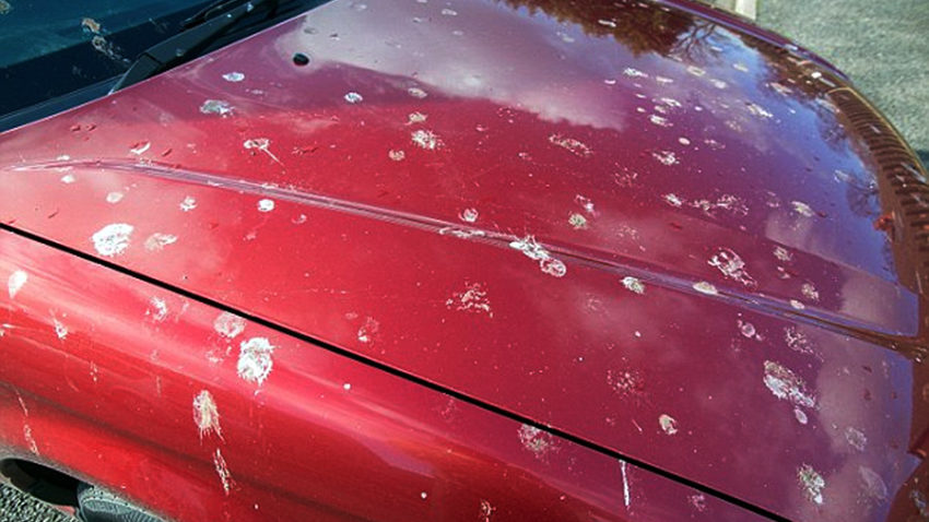 Understanding Bird Droppings and Car Paint Damage 3
