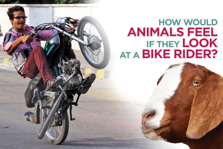 How Would Animals Feel if They Look at a Bike Rider 3