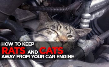 Keeping Rats and Stray Cats Away From Your Car Engine 38