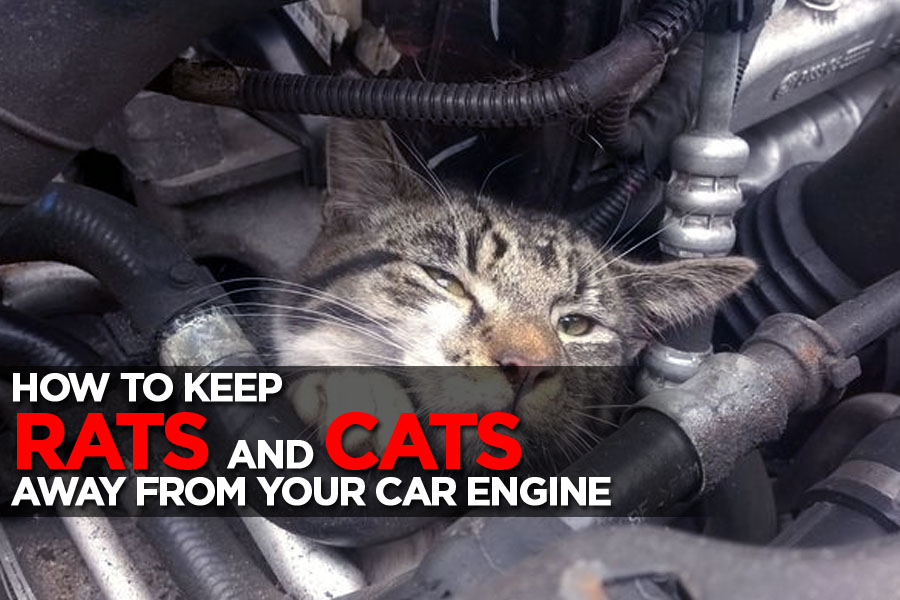 Keeping Rats and Stray Cats Away From Your Car Engine 10