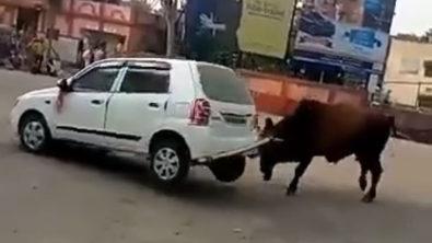 Angry Bull Didn't Liked Suzuki Alto 1