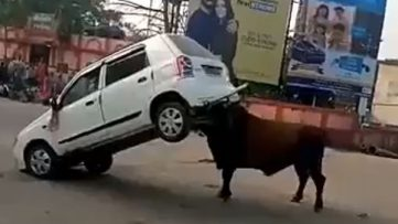 Angry Bull Didn't Liked Suzuki Alto 3