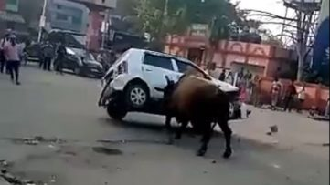 Angry Bull Didn't Liked Suzuki Alto 4