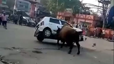 Angry Bull Didn't Liked Suzuki Alto 3